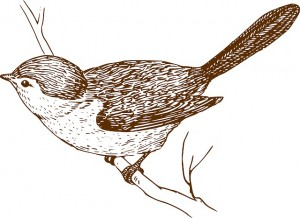 pothumanismi lintu